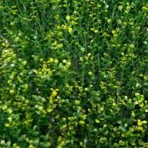 Follaje sintético - Arrayán limón